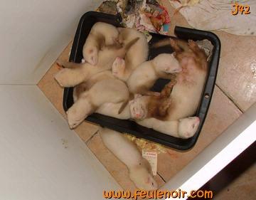 furetons bébés à J42